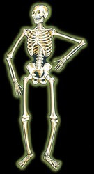 Jointed Nite-Glo Skeleton, 55 in