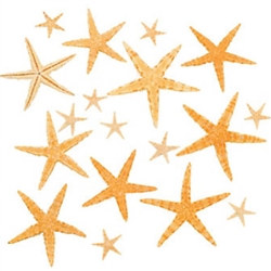 Natural Starfish Assortment