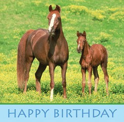 "Wild Horses Happy Birthday Luncheon Napkins, 12.9"" x 12.9"", 16/pkg"