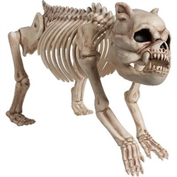 Cemetary Dog Skeleton